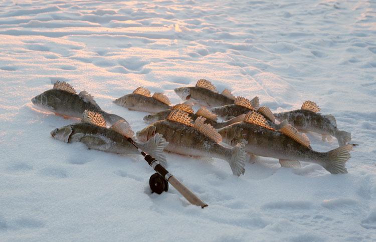 прогноз на клев рыбы нягань