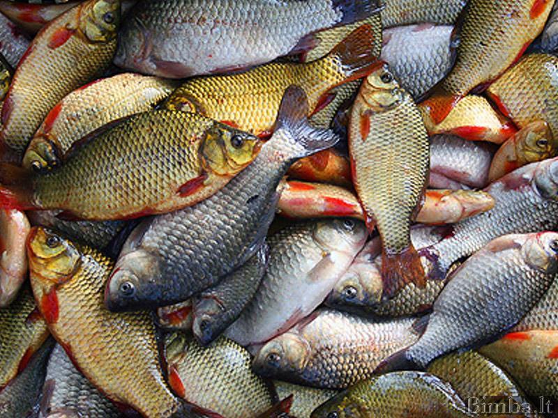 педиатр название рыб с фото дизайнеры стилисты