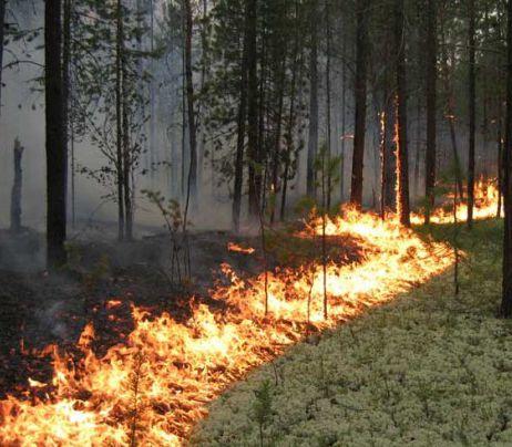 ВХМАО пожарные и cотрудники экстренных служб гасят 13 лесных пожаров