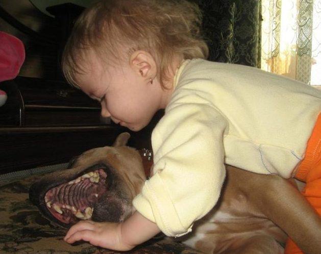 Собака, покусавшая вСургуте двухлетнего ребенка, дотого нападала на остальных детей