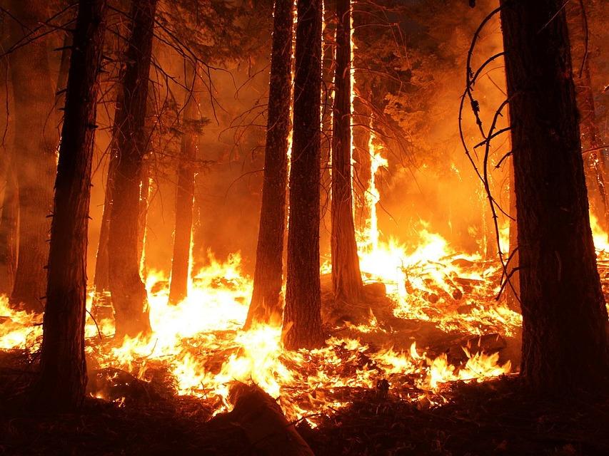 Площадь пожаров вХМАО засутки возросла практически насотню гектаров